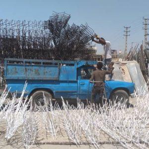حفاظ شاخ گوزنی در تهران