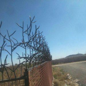 حفاظ شاخ گوزنی در هشتگرد