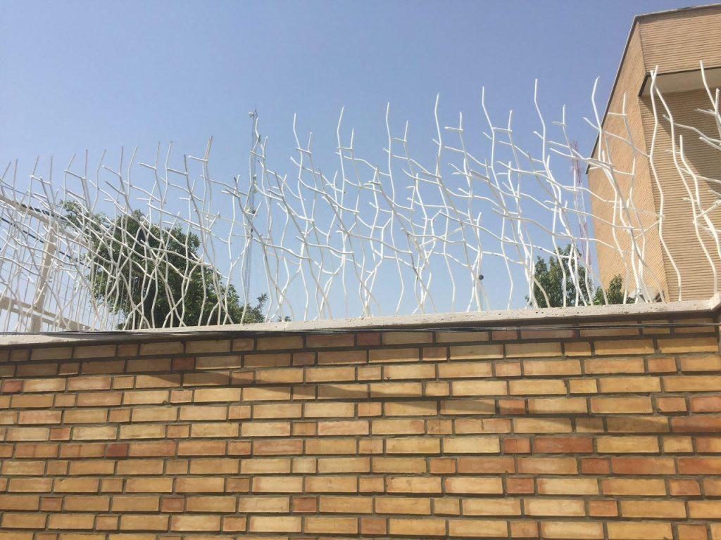 حفاظ شاخ گوزنی در گیلان