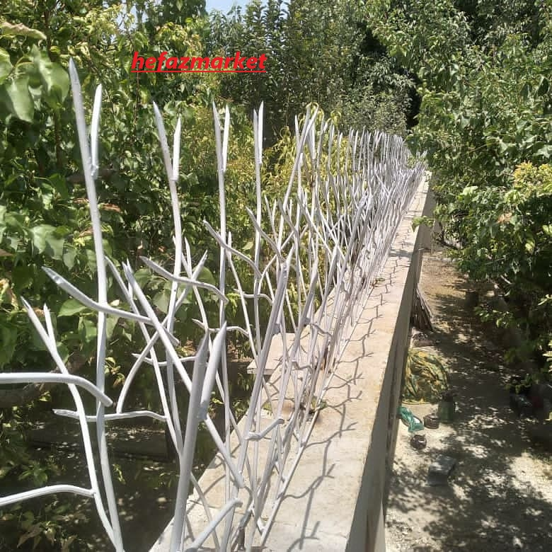 حفاظ شاخ گوزنی در لواسان